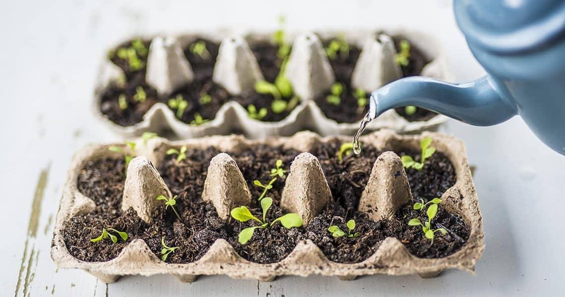 Comment faire ses propres semis soi-même ?