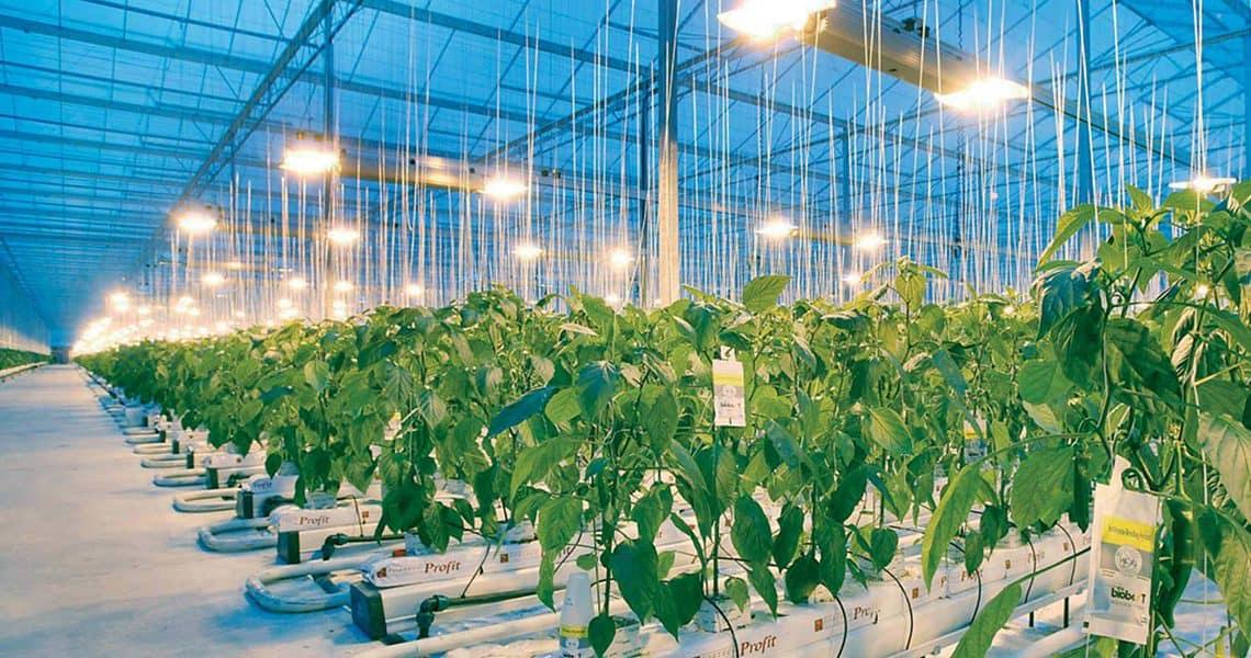 Lampe UV : Les 5 meilleures lampes UV pour nos plantations