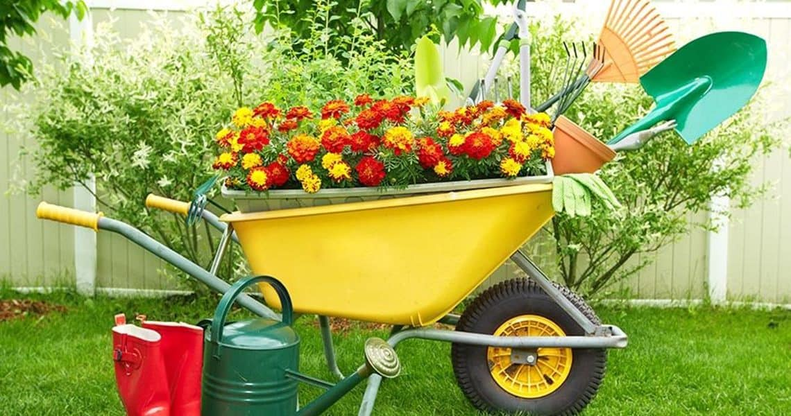 Conseil jardinage : que planter en Septembre ?